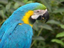 Ingrijirea papagalilor Macaw