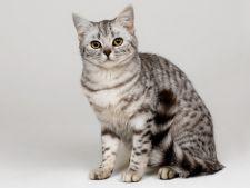 Osteoporoza la pisici