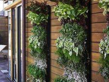 Cum amenajezi o gradina verticala de legume
