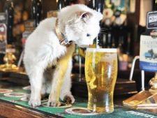 Afla care este secretul longevitatii unei pisici!