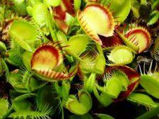 Cele mai bizare plante din lume