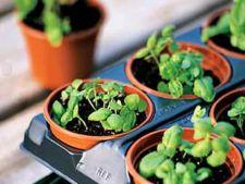Cum alegi tavile pentru plante