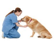 Mai - luna mondiala impotriva cancerului la animale