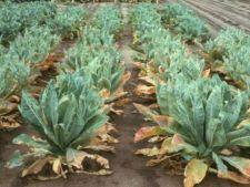 Ghidul substantelor nutritive necesare plantelor din gradina