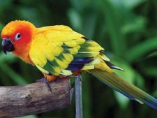 Un papagal ratacit a spus politiei adresa unde locuia, dupa care a fost