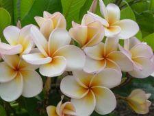 Flori care simbolizeaza dragostea