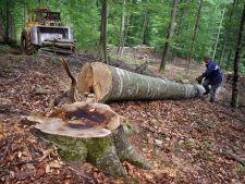 Studiu Greenpeace: 3 hectare de padure dispar in fiecare ora din Romania
