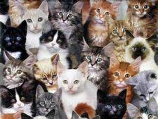 50 de lucruri pe care nu le stii despre pisici