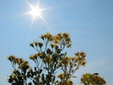 Cum ingrijesti plantele de gradina pe timp de canicula