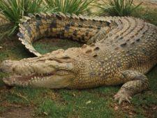 Cele mai cautate animale de companie sunt... crocodilii