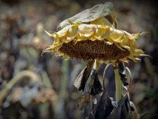 Cum identifici problemele plantelor