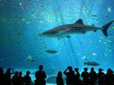 Cele mai mari acvarii din lume
