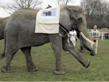 Elefantul Citta