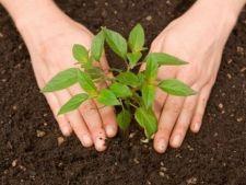 Substante hranitoare care imbunatatesc calitatea solului din gradina
