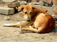 Targ de adoptii caini in Oradea, pe 1 Iunie
