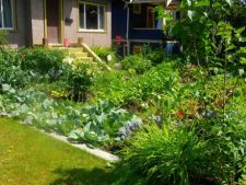 Fa-ti o gradina de legume in curte