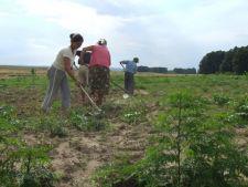 Agricultorii afectati de caderile de zapada vor fi despagubiti cu maximum 7.500 de euro