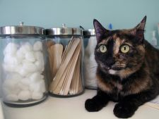 4 greseli de evitat in ingrijirea pisicii