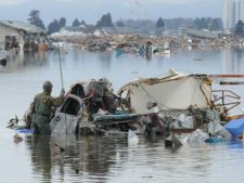 Comportamentul animalelor, detectorul japonezilor pentru tsunami