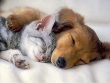 Caini vs pisici - care este un animal de casa mai bun?