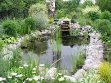 Plantele marginale, decorul ideal pentru sursa de apa din gradina
