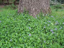4 plante de tip gazon pentru o gradina situata pe deal