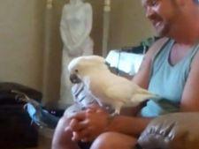 Un papagal Cacadu, fan infocat al trupei AC/DC