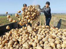 Cartofii si fructele, in topul scumpirlor din luna mai