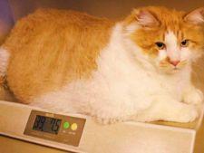 Top 4 cele mai grase animale din lume