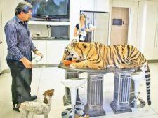 Un tigru, animal de companie pentru o familie de africani
