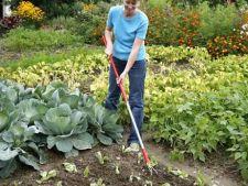 Ingrijirea legumelor pe canicula