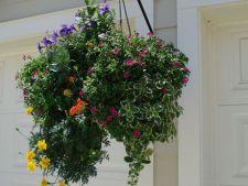 Cum creezi un cos suspendat cu flori