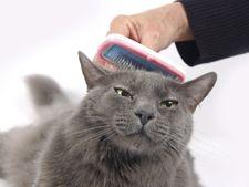 Ghemurile de blana la pisici - cum sa le reduci