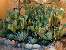Ce plante de gradina alegi daca ai alergii