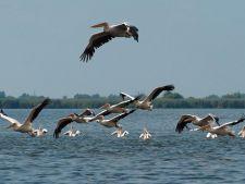 Vanatoarea in Delta Dunarii va fi interzisa
