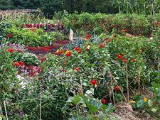 Gradina de legume si spatiul necesar