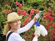 Pesticide naturale pe care le poti folosi cu succes in gradina