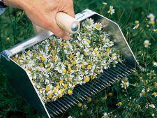 Recoltarea plantelor medicinale