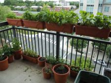Metode simple de a avea o gradina de legume pe balcon