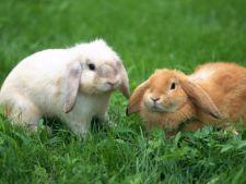 Ce trebuie sa stii despre ingrijirea iepurelui