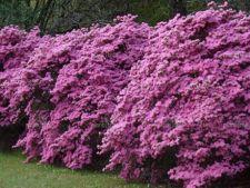 Plante pentru un gard viu spectaculos