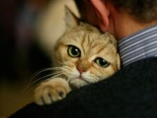 Prevenirea cancerului la pisici