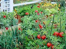 Plante de gradina pentru mancaruri italienesti
