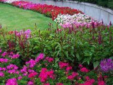 Amenajarea gradinii in paturi de flori