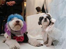 Doi caini au avut o nunta de 158 de mii de dolari