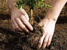 Ingrijirea copacilor