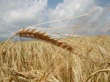 Fermierii romani cer interzicerea exporturilor de cereale si instituirea starii de urgenta