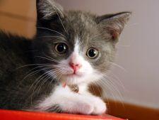 Reguli esentiale pentru a mentine pisica in siguranta
