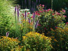 Ponturi pentru gradinarit in luna august