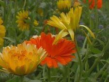 Cele mai frumoase flori de toamna pentru gradina ta